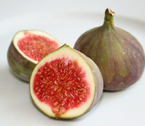 Ficus carica or Fig Tree شجرة التين