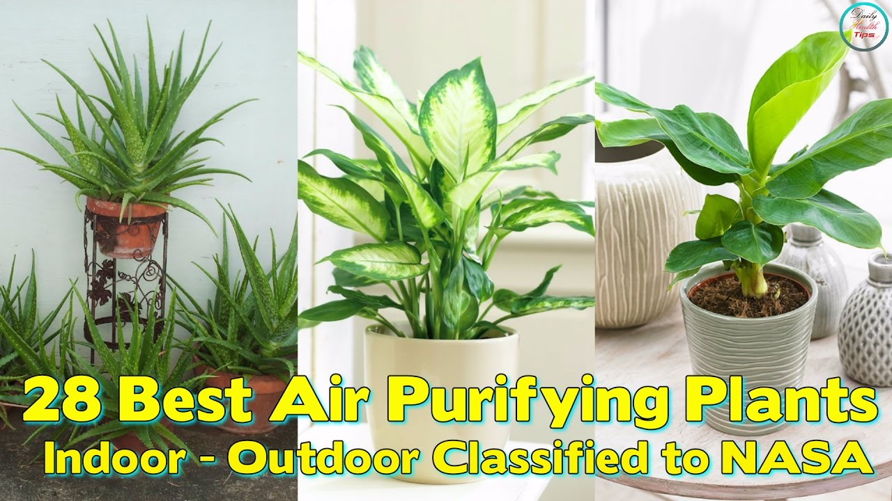air purifying plants by nasa