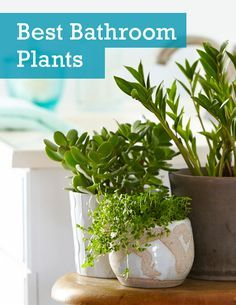 indoor plants for bathroom