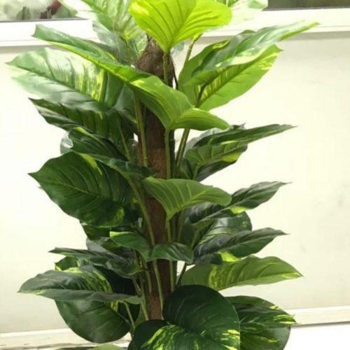 Artificial money plant