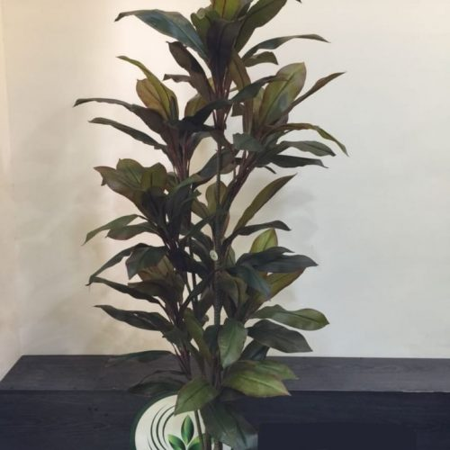 Artificial Cordyline plant