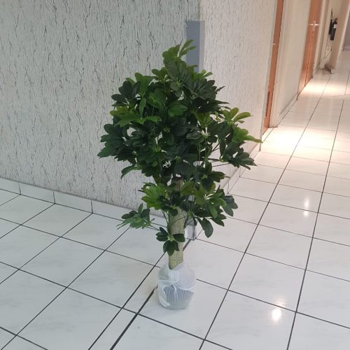 Artificial indoor Schfflera 1.1m