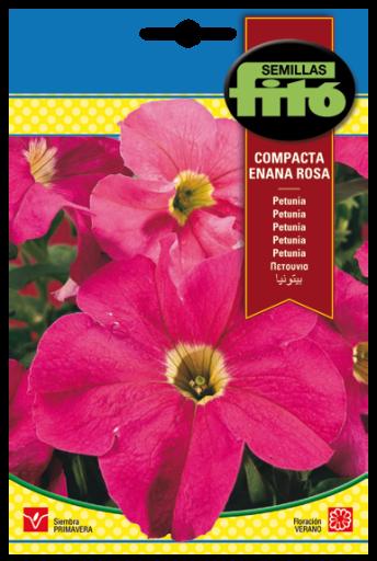 """Petunia """"Dwarf"""" Compact Rose"""