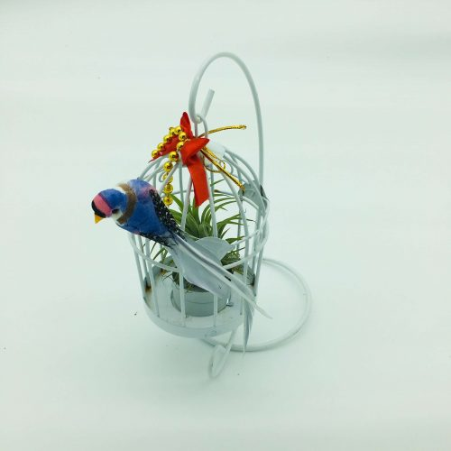 Hanging Cage Air Plant 15cm