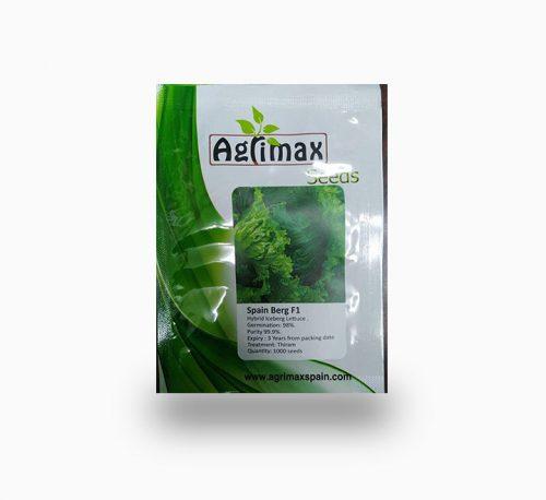 Lettuce Iceberg F1 Premium Seeds