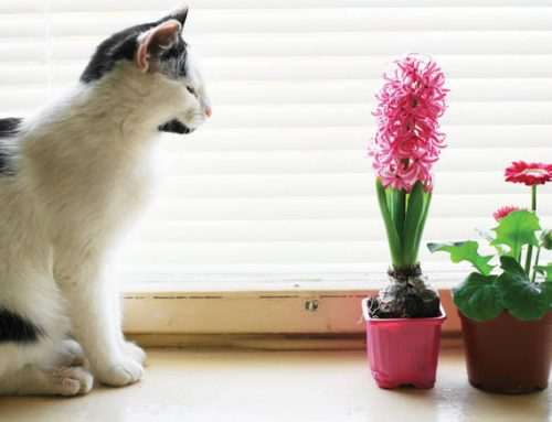 30 Toxic and Pet Friendly Plants