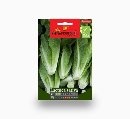 Lactuca Sativa Agrimax Seeds