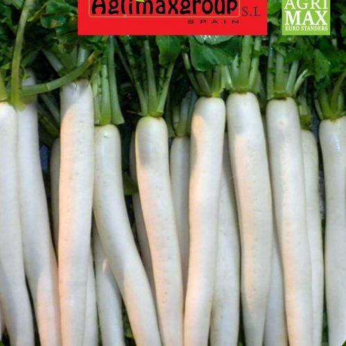 white radish