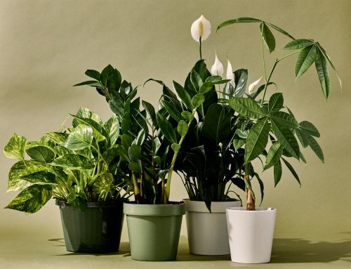 5 Common Indoor Plants Mistakes