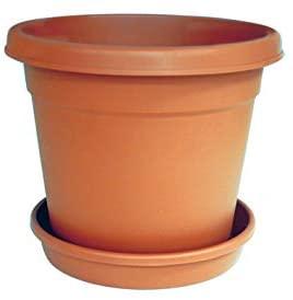 Cosmoplast Flower Pot
