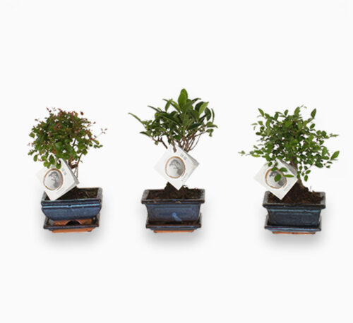 Mini Bonsai Mixed with bowl and plate