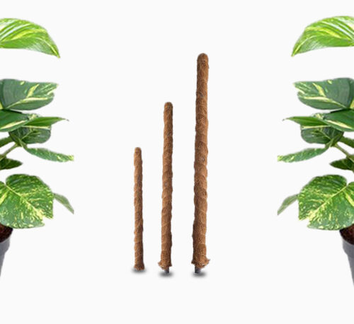 Moss Plant Support Stick